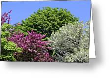 Spring Color 2 051818 Greeting Card