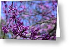 Spring Color Pop Greeting Card