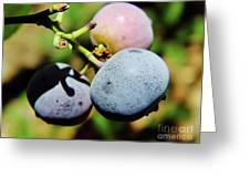 Spring - Colors - Blueberries Greeting Card