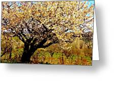 Spring Comes To The Old Cherry El Valle New Mexico Greeting Card