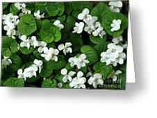 Spring Cover Greeting Card