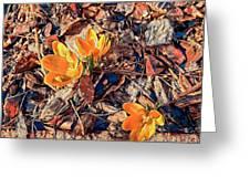 Spring Crocus Flower Greeting Card