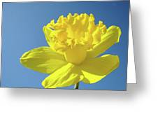 Spring Daffodil Flowers Art Prints Blue Sky Baslee Troutman Greeting Card
