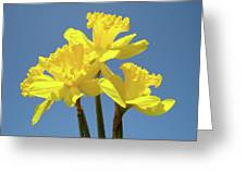 Spring Daffodil Flowers Art Prints Canvas Framed Baslee Troutman Greeting Card