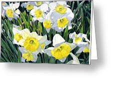 Spring- Daffodils Greeting Card