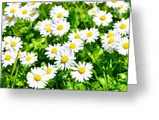 Spring Daisy In The Meadow Greeting Card