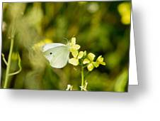 Spring Day Greeting Card