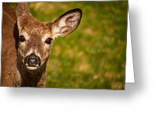 Spring Deer Greeting Card