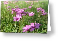 Spring Dream Greeting Card