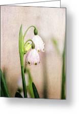 Spring Duet Greeting Card