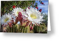 Spring Easter Cactus Blooms 789 Greeting Card
