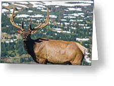 Spring Elk Greeting Card