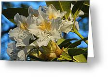 Spring Exuberance  Greeting Card