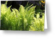 Spring Fern Fronds Greeting Card
