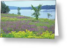 Spring Fever Greeting Card