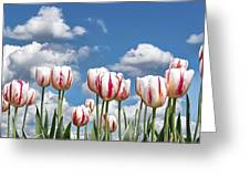 Spring Field Greeting Card