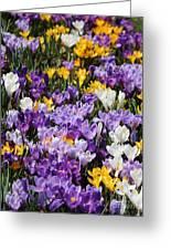 Spring Fling Greeting Card