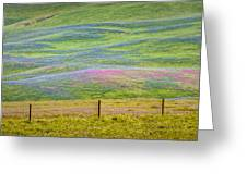Spring Flower Bloom  Greeting Card