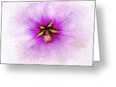 Spring Flower Frill Greeting Card