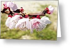 Peach Flowers Greeting Card