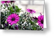 Spring Flowers 2 Greeting Card