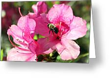 Spring Flowers 3 Greeting Card