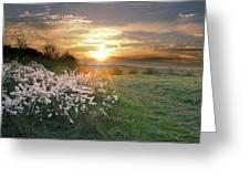 Spring Flowers. Greeting Card