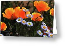 Spring Flowers In Payson Arizona Greeting Card