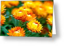 Spring Flowers In The Afternoon Greeting Card