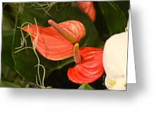 Spring Flowers No.8 Greeting Card