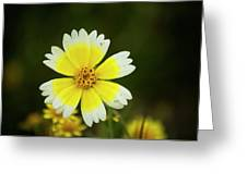 Spring Flowers Shell Road Greeting Card