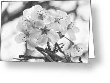 Spring Flowers - White Greeting Card