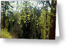 Spring Foliage Greeting Card