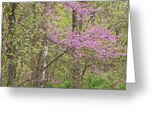 Spring Forest With Redbud Greeting Card