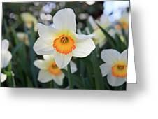 Spring Fresh Greeting Card