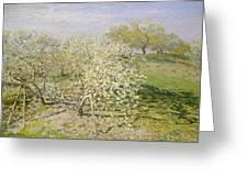 Spring. Fruit Trees In Bloom Greeting Card