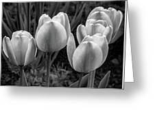 Spring Garden - Act One 2 Bw Greeting Card