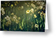 Spring Garden With Narcissus Flowers Greeting Card