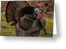 Spring Gobbler Greeting Card