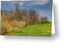 Spring Grass Greeting Card