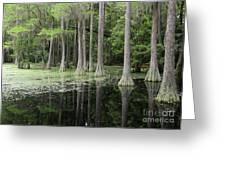 Spring Green In Cypress Swamp Greeting Card