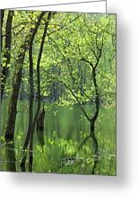 Spring Green  Greeting Card by Lori Frisch