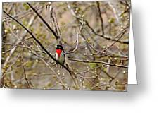 Spring Grosbeak Greeting Card