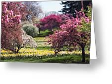 Spring Has Sprung Greeting Card