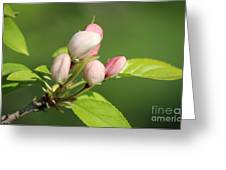 Spring Highlights Greeting Card