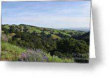 Spring Hills Greeting Card