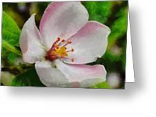 Spring - Id 16235-142747-0642 Greeting Card
