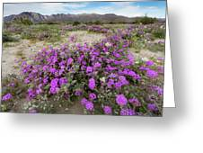 Spring In Anza  Greeting Card
