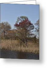 Spring In Bombay Hook Greeting Card