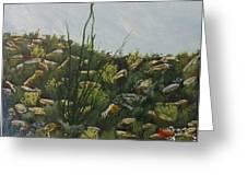 Spring In Borrego Greeting Card